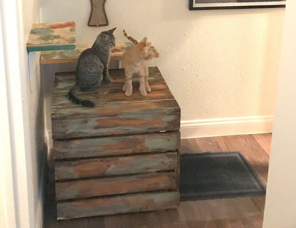 two kittens on top of a wooden box